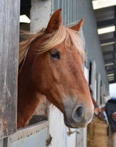 Knockillaree Horse